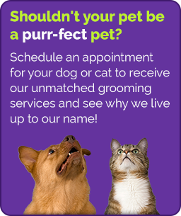 AKC Certified Pet Grooming Shop